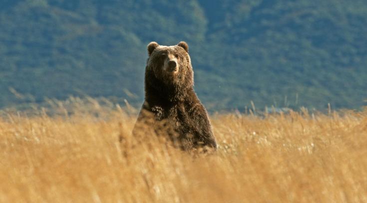 © Voyage observation animalière faune Alaska nature