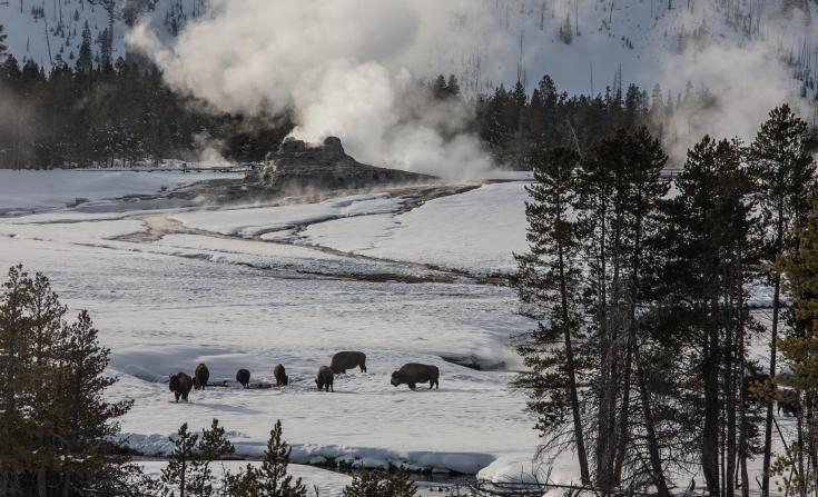 © Parc national de Yellowstone