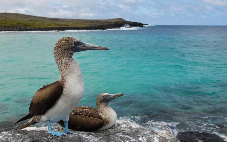© photographier la faune des galapagos