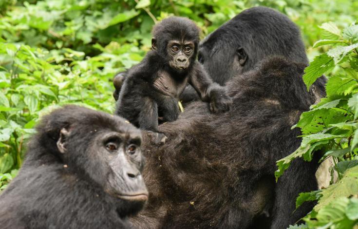 © Voyage photo Bwindi Kibale