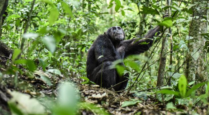 © Gorilles voyage photo