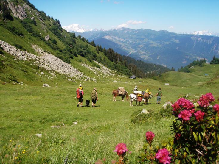 © Randonnées avec mules de bât en Savoie