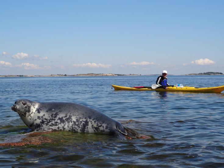 © kayak de mer Finlande