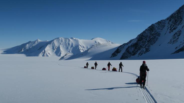 © ski et pulka ours polaire