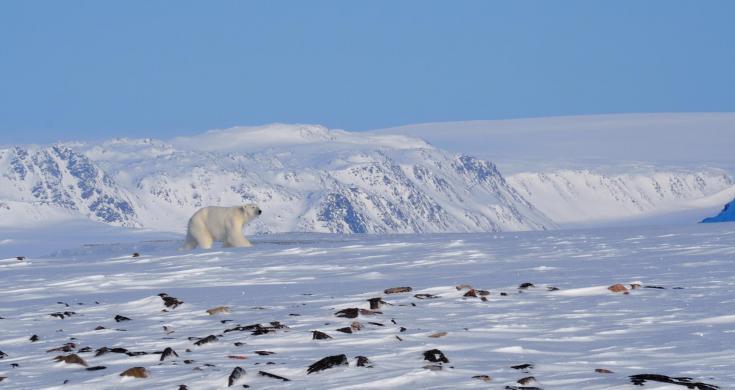 © spitzberg ours polaire ski