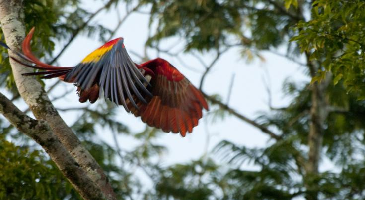 © Voyage marche observation faune costa rica
