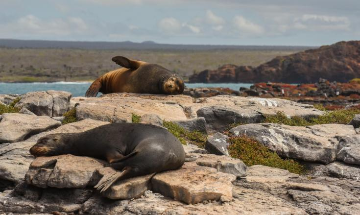 © galapagos terres oubliees