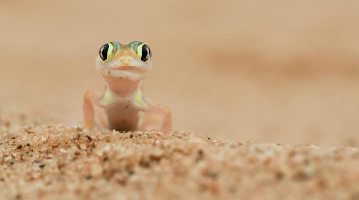 © voyage nature namibie