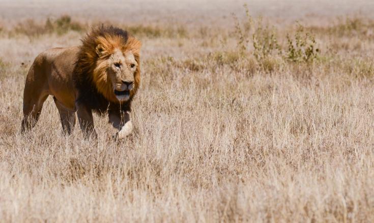 © safari nature photo afrique