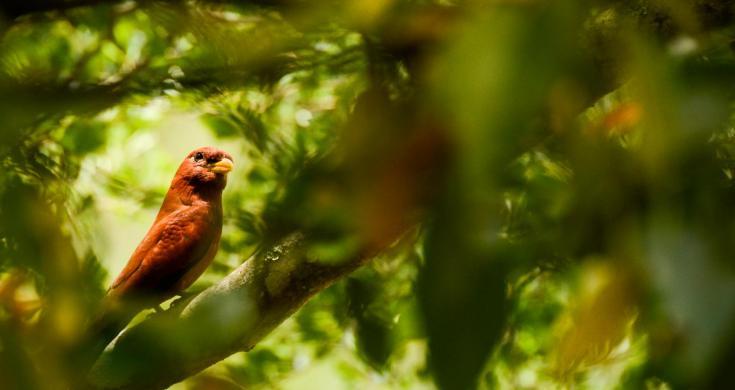 © photographier la nature de madagascar