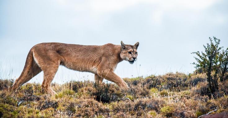 © voyage photographie nature animaux mer croisière patagonie découverte