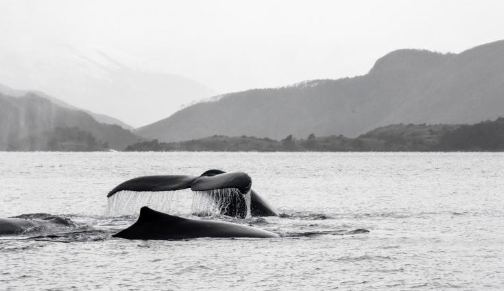 © Voyage nature patagonie