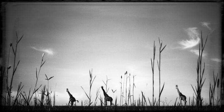 © safari sauvage faune afrique