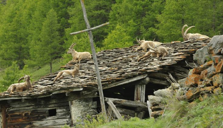 © Séjour photo montagnes Italie Alpes observation faune flore