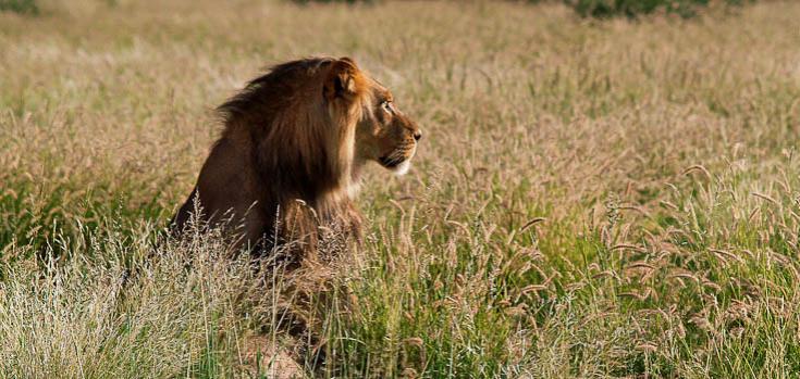 © voyage photo animaliere botswana