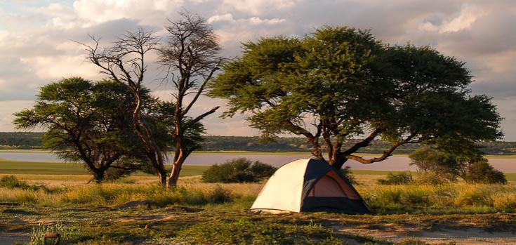 © safari nature botswana kalahari