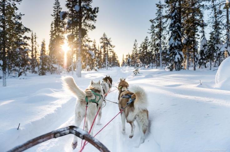 © Laponie voyage aurores boréales Suède Norvège chien de traineau Lofoten hiver neige froid