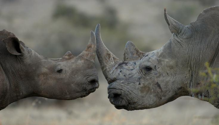 © safari hors sentiers battus Kenya