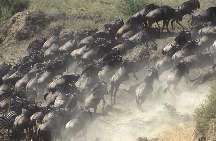 © Grande Migration Kenya