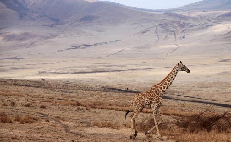 © Voyage Tanzanie