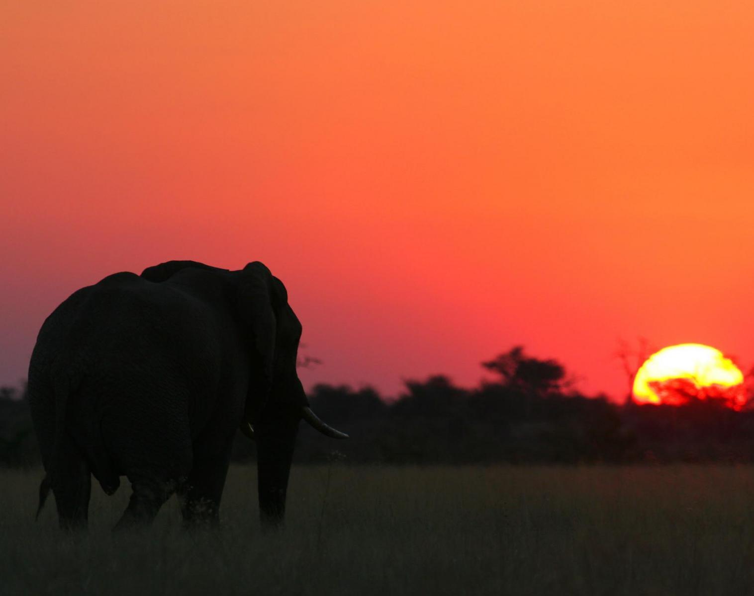 Namibie  Victoria Falls - Botswana - Namibie : trésors et secrets d'Afrique Australe   Découverte Observation nature Safari