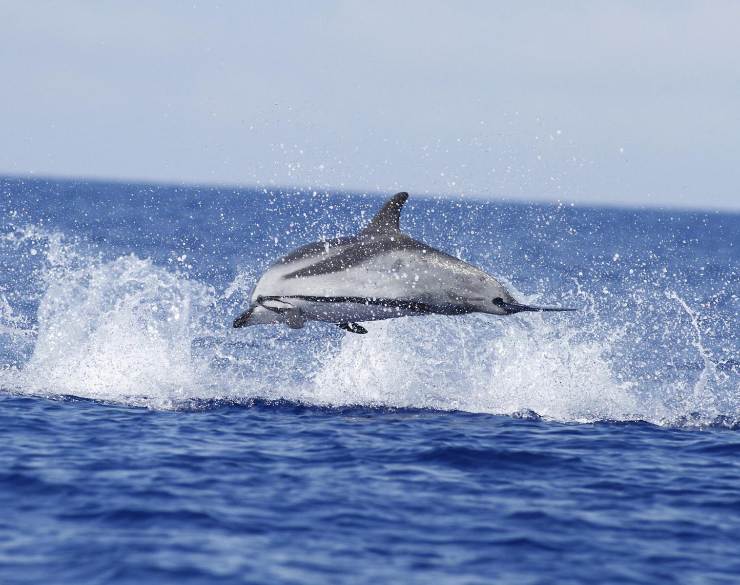 Portugal  Cétacés des Açores - voyage en liberté   Découverte Observation nature Apnée & Plongée  Balade nature