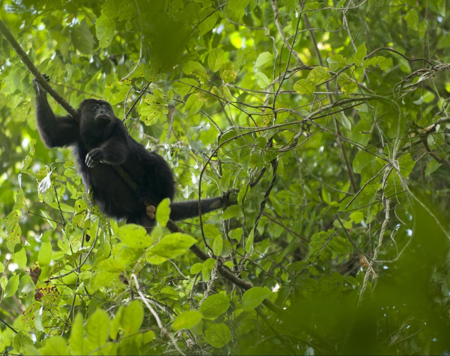 Costa Rica  De Tortuguero à Corcovado: spécial photo   Photo Observation nature Balade nature