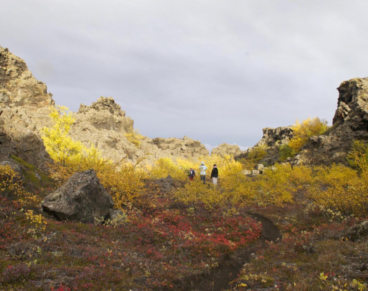 Islande  Islande, féeries d'automne    Découverte Trek & Randonnée Observation nature