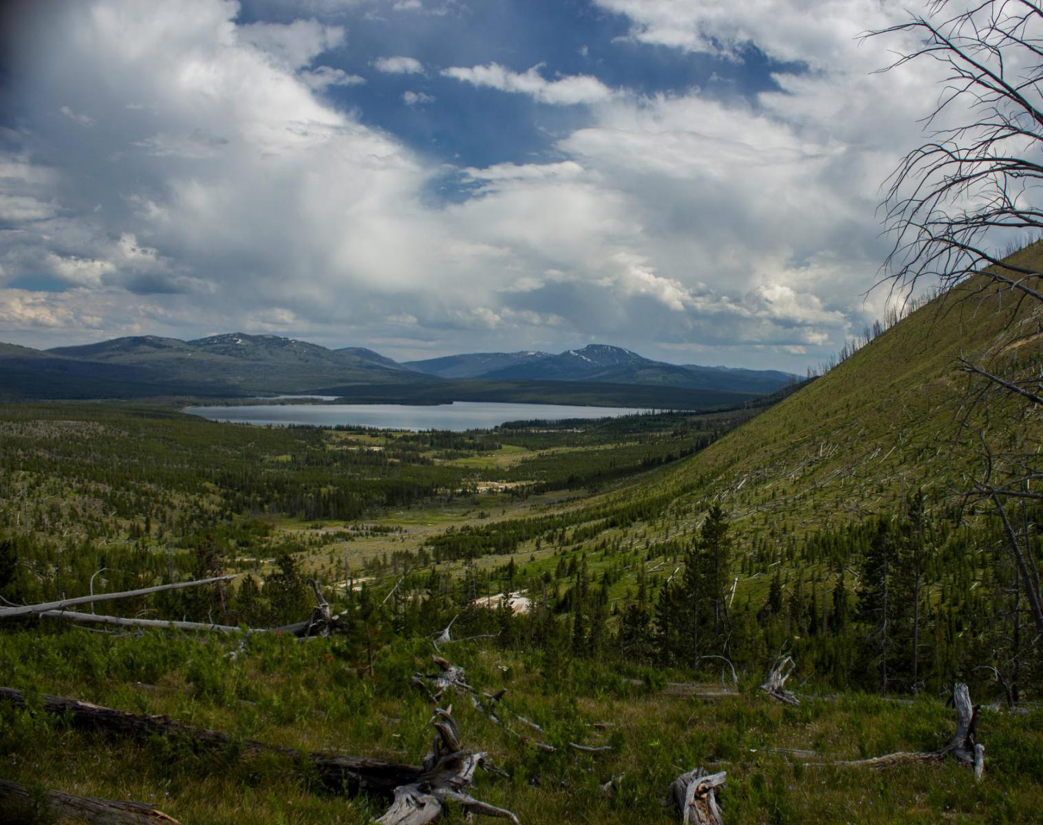 États-Unis  Entre canyon et geyser, trek au coeur du Yellowstone   Découverte Trek & Randonnée Observation nature Balade nature
