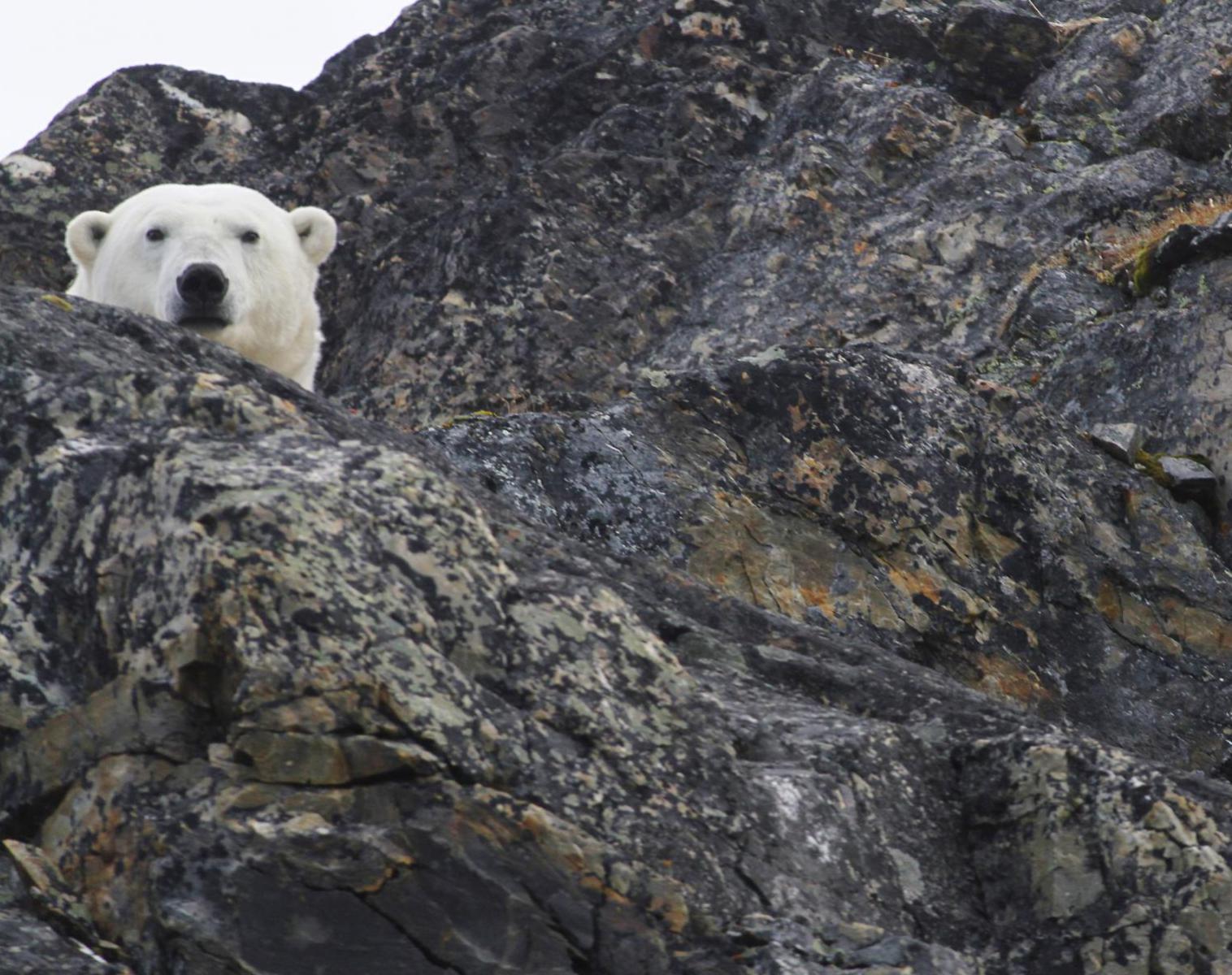 Spitzberg  Trek et voile au pays des ours polaire   Trek & Randonnée Observation nature Navigation
