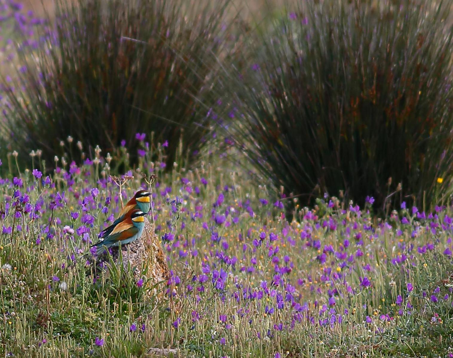 Espagne  Andalousie, un monde d'oiseaux   Découverte Observation nature Balade nature