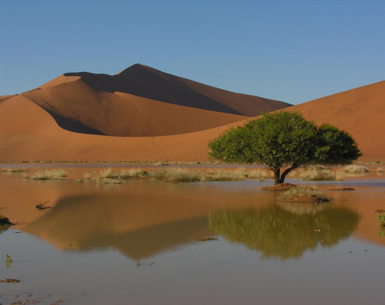 Namibie  Grand Trek dans le Namib   Observation nature Rencontres et cultures du Monde