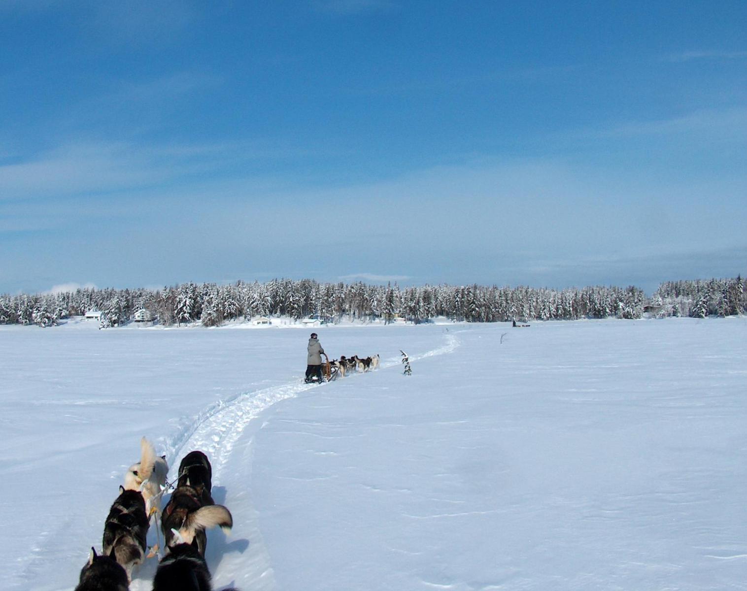 Canada  L'appel des glaces   Découverte Chiens de traîneaux
