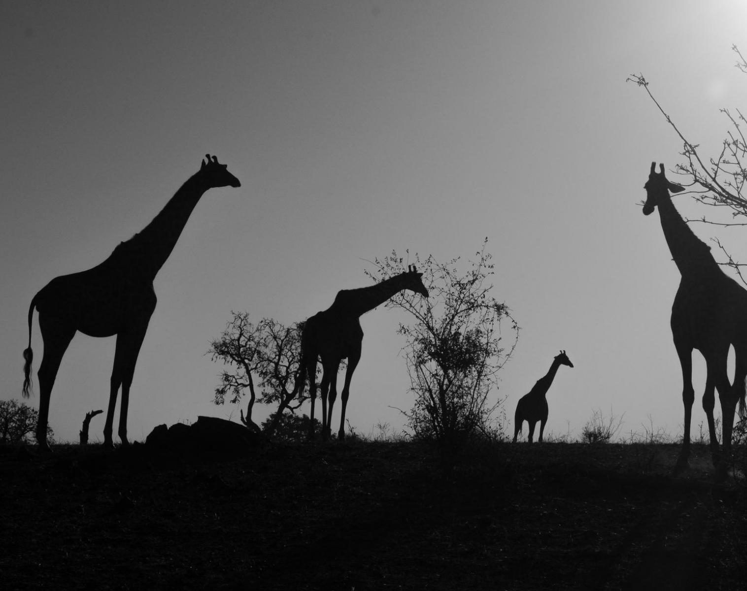 Namibie  Sentiers Secrets du Namib   Trek & Randonnée Safari