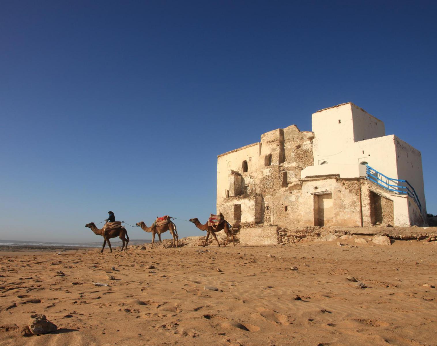 Maroc  Essaouira et sa côte Atlantique sauvage   Trek & Randonnée