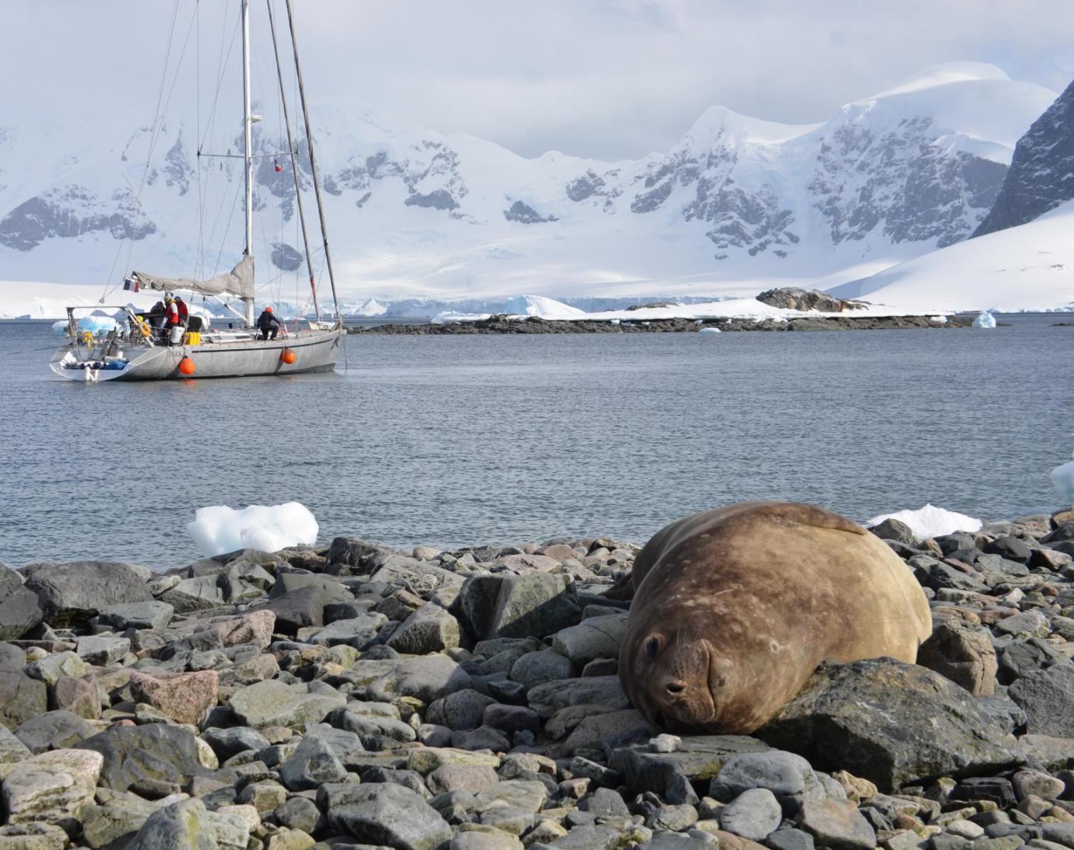 Antarctique  Le 6ème continent : expédition en voilier   Découverte Observation nature Navigation