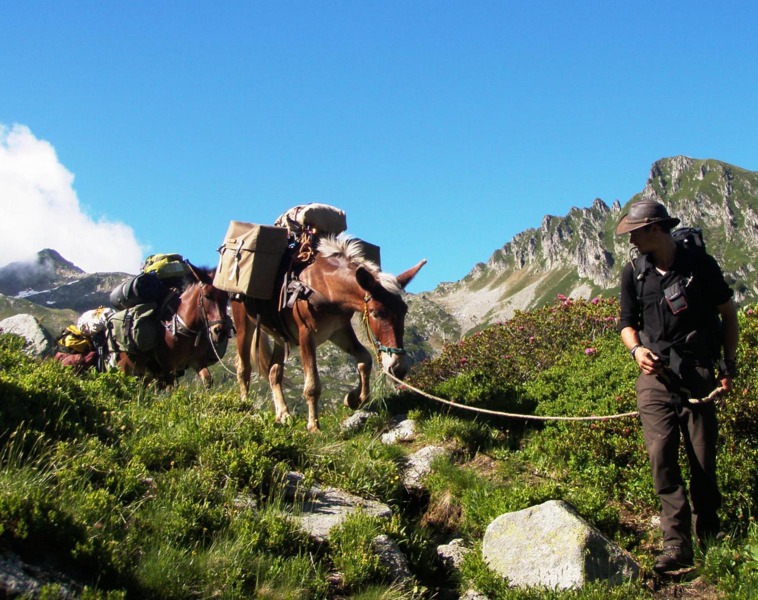 France  Les muletiers de l'Alpe   Trek & Randonnée