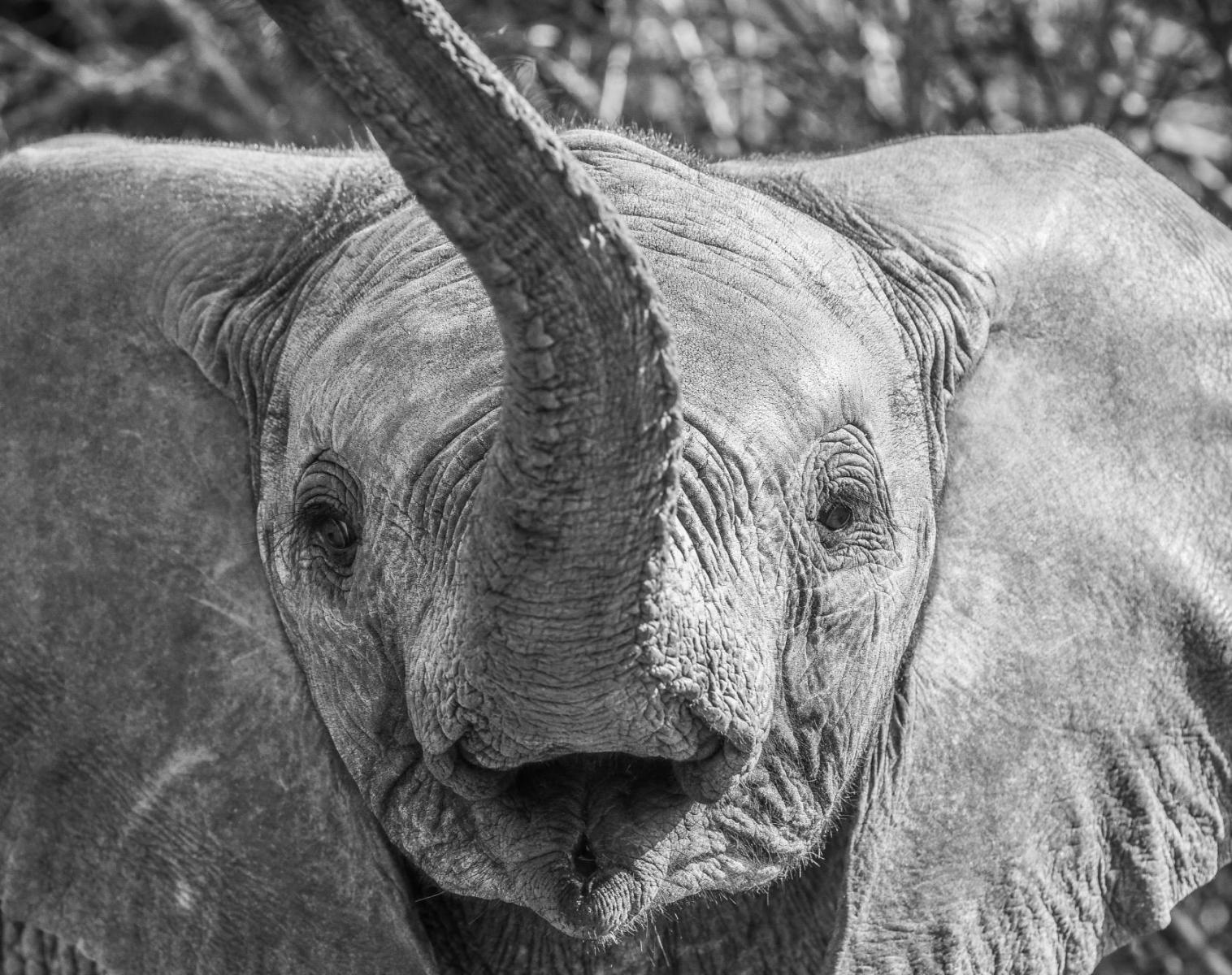 Kenya  Eden africain : voyage famille, safaris et randonnée     Découverte Observation nature Safari