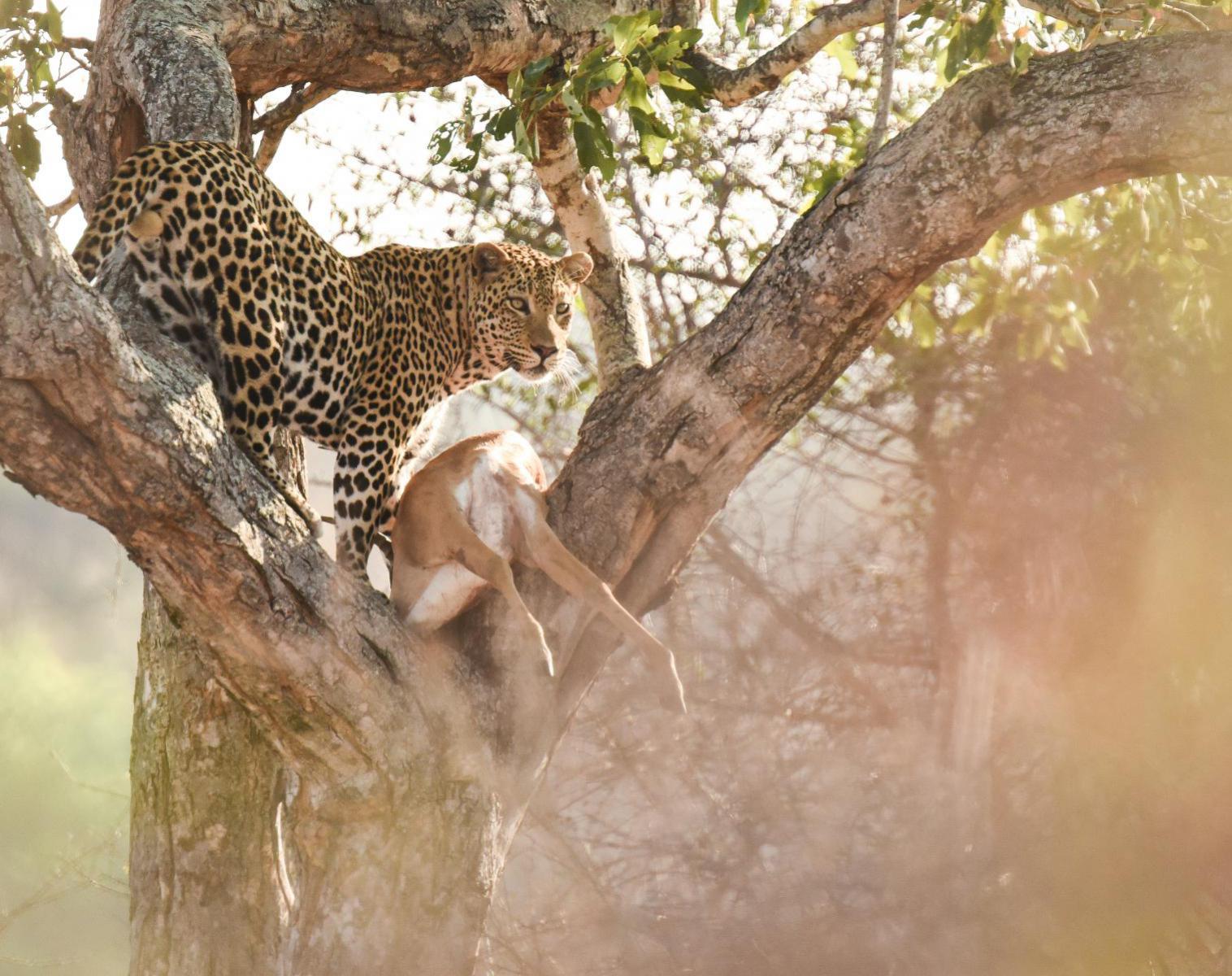 Afrique du Sud  Focus léopard, spécial photo   Photo Observation nature Safari Balade nature