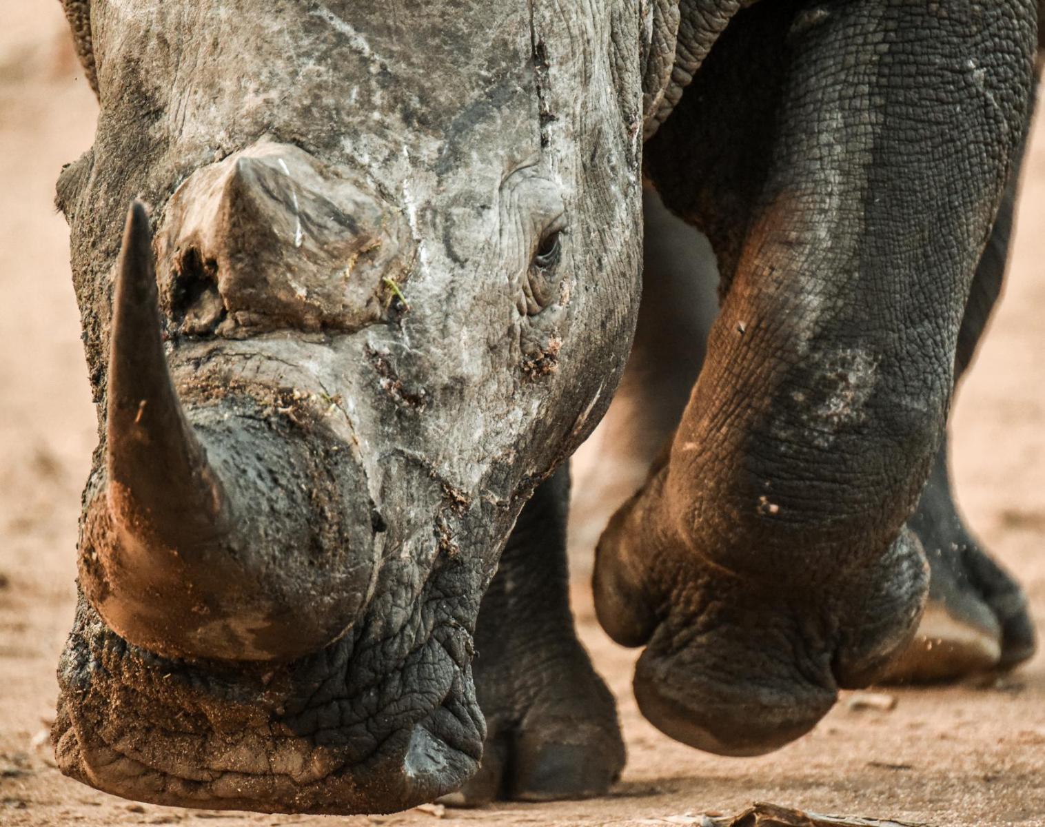 Afrique du Sud  Afrique du Sud, autrement sauvage   Découverte Trek & Randonnée Safari