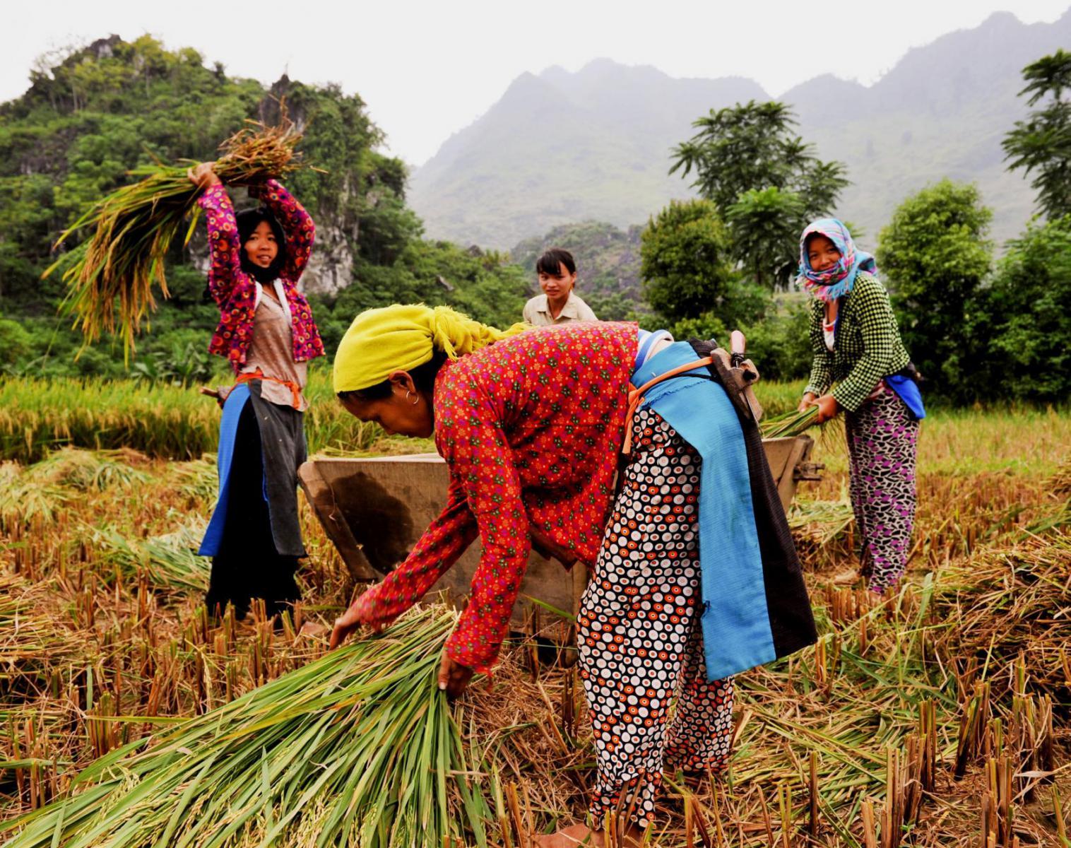 Vietnam  Merveilles du Vietnam, l'axe Nord - Sud   Trek & Randonnée Navigation Rencontres et cultures du Monde