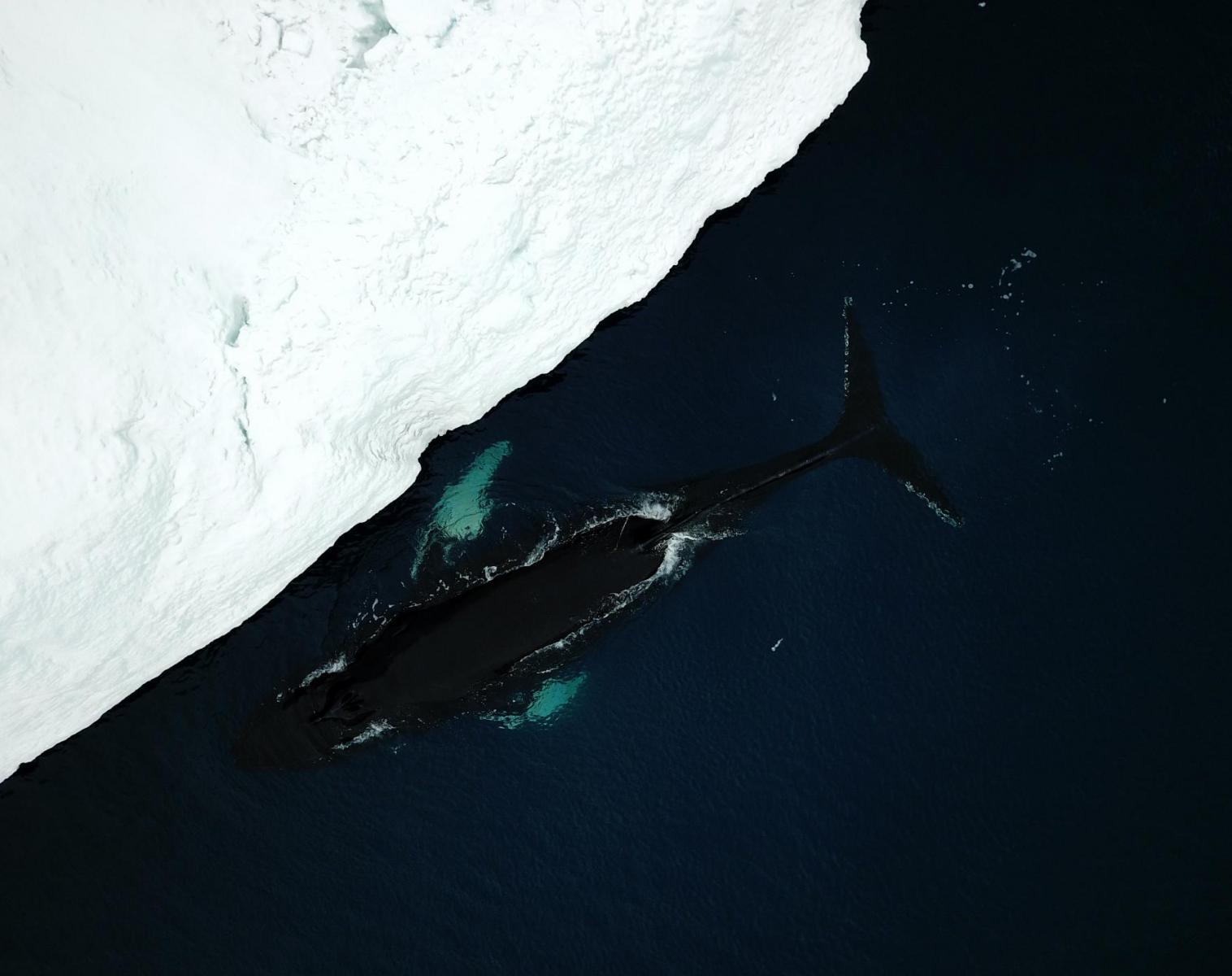 Groenland  Glaciers et icebergs de la Baie de Disko   Trek & Randonnée Photo Rencontres et cultures du Monde