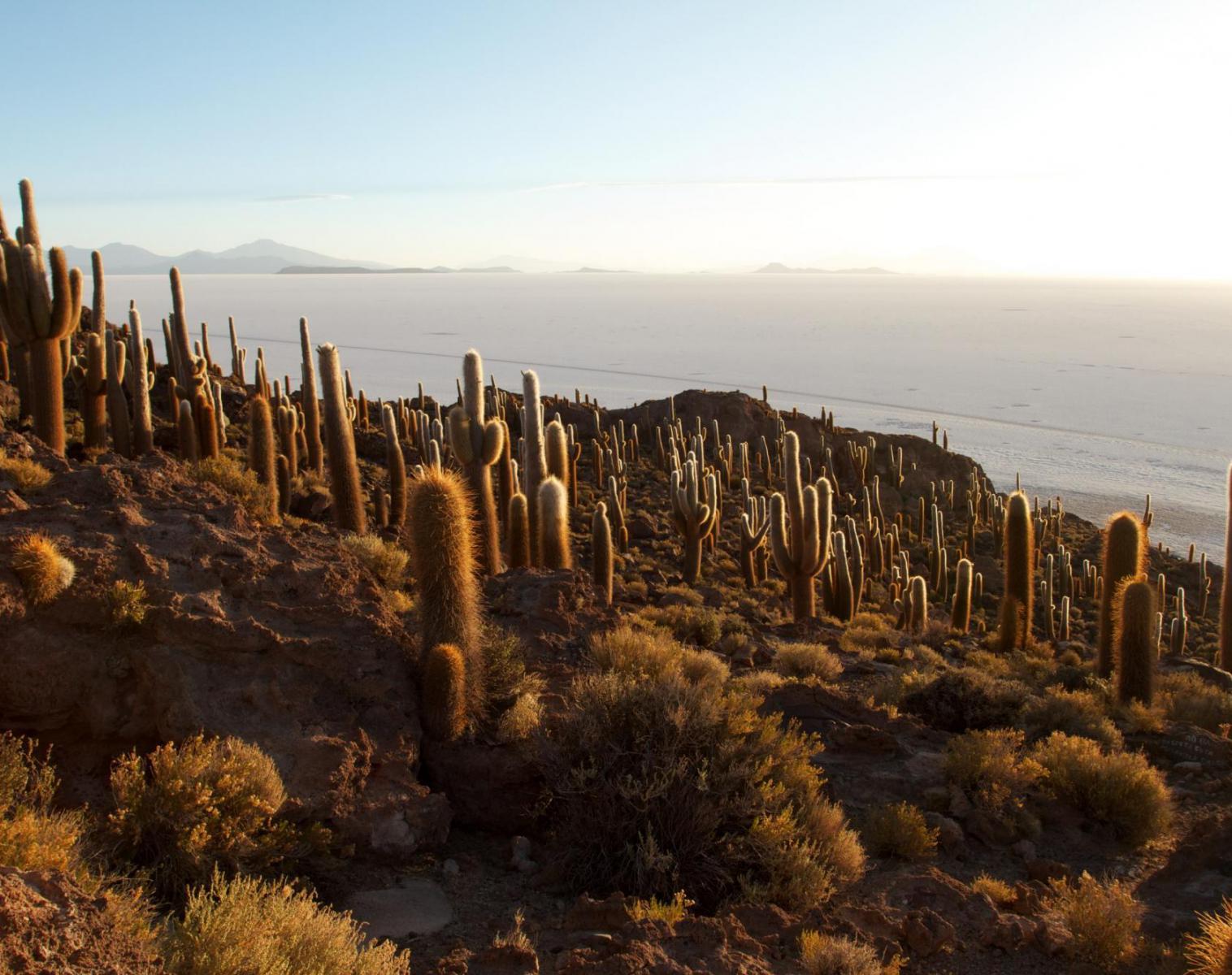 Chili  L'Odyssée Andine Etape 3 - Chili, Bolivie, Argentine : Trek au sommet de l'Atacama   Trek & Randonnée Rencontres et cultures du Monde