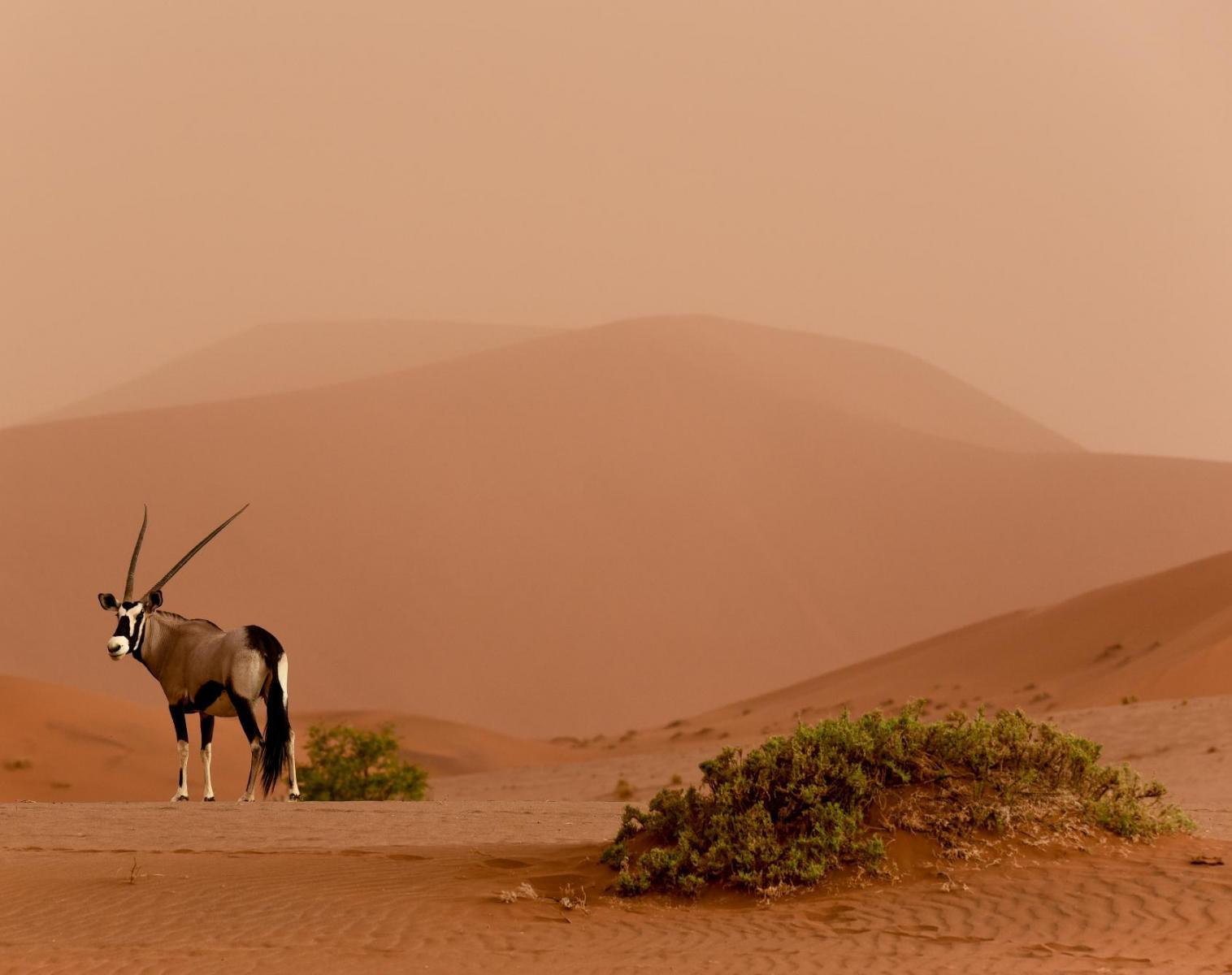 Namibie  Safaris d'Etosha au désert du Namib   Photo Observation nature Safari Balade nature