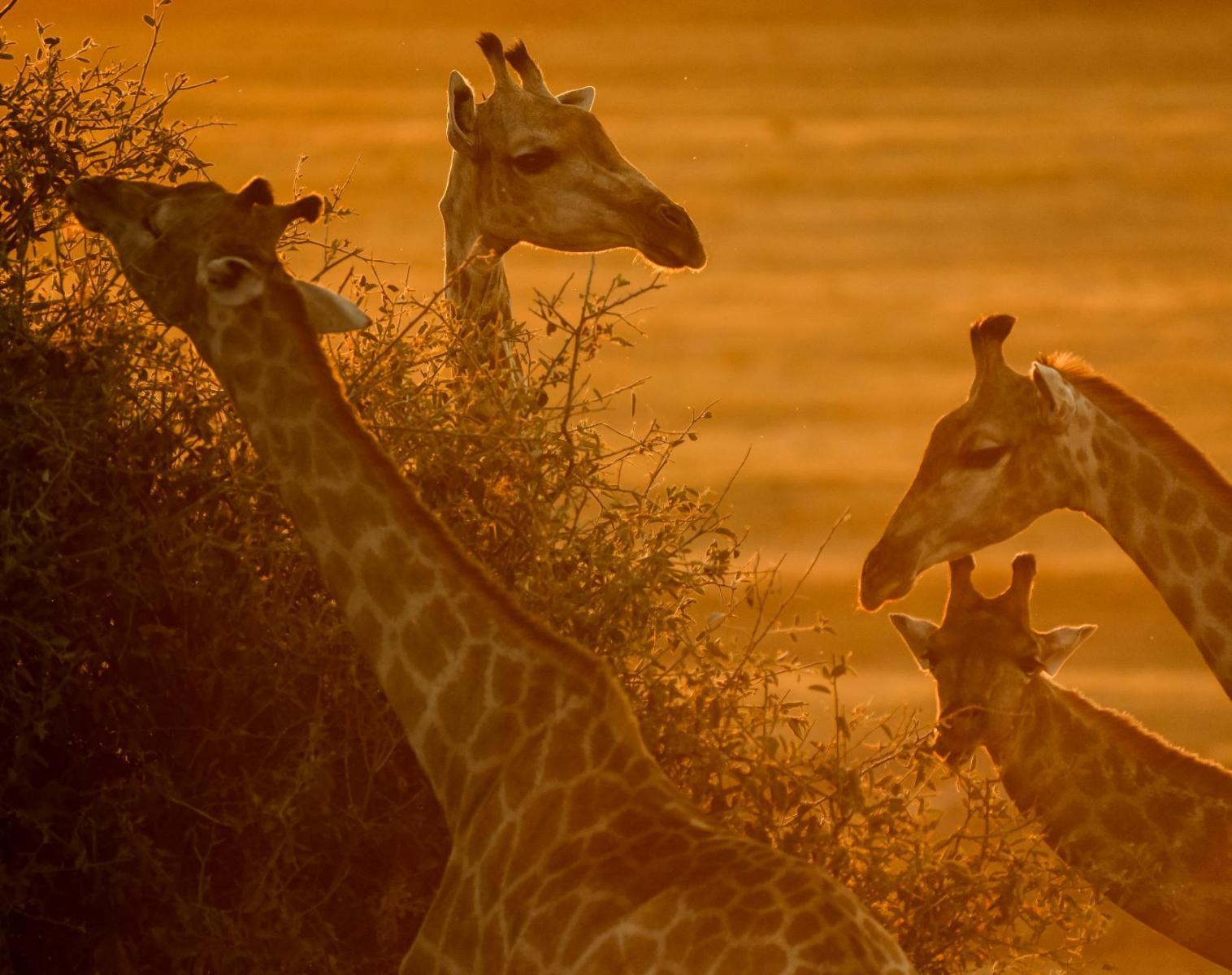 Botswana  Botswana, Terre Sauvage   Safari