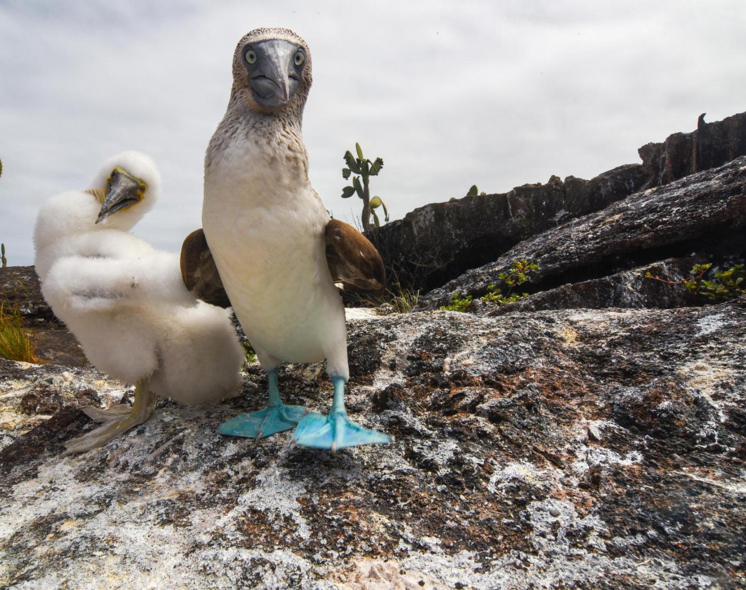 Équateur  Spécial Galapagos et Isla Plata   Photo Observation nature Navigation Apnée & Plongée  Balade nature