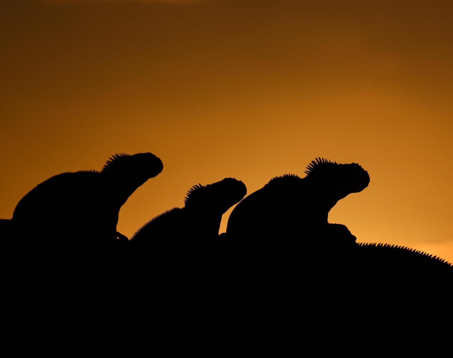 Équateur  Croisière aux Galápagos    Photo Observation nature Navigation Apnée & Plongée  Balade nature