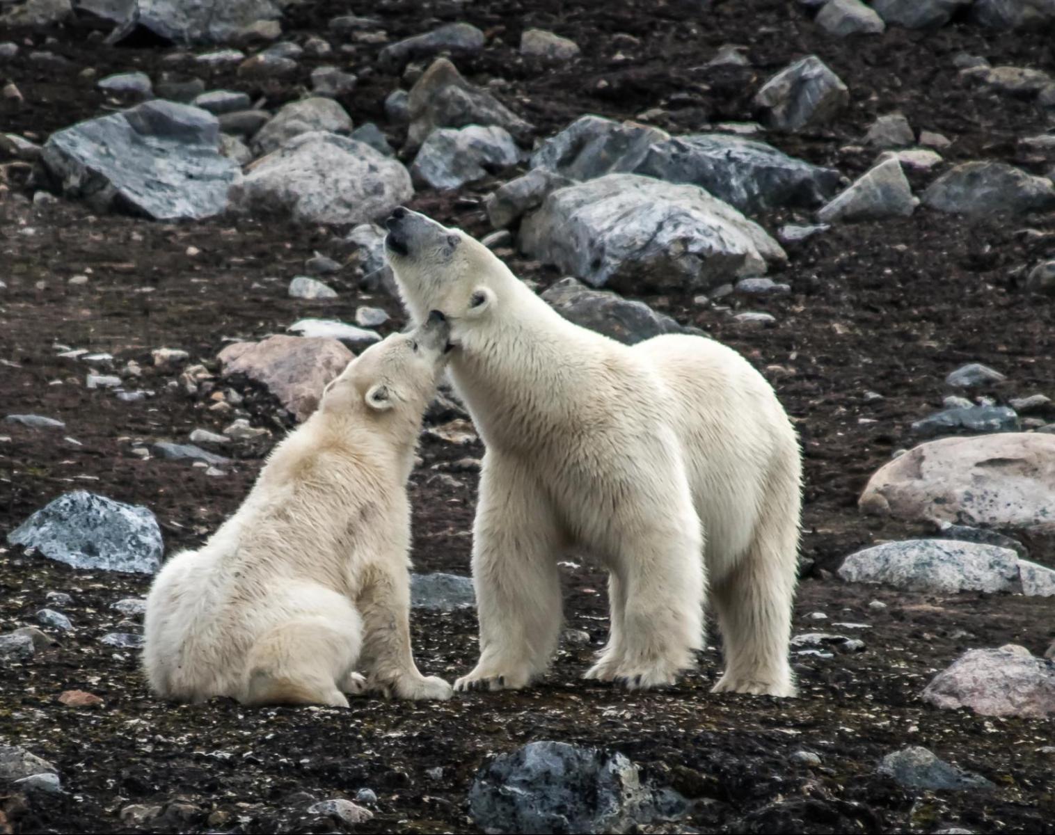 Spitzberg  Voile et randonnées au pays des ours polaires   Trek & Randonnée Observation nature Navigation