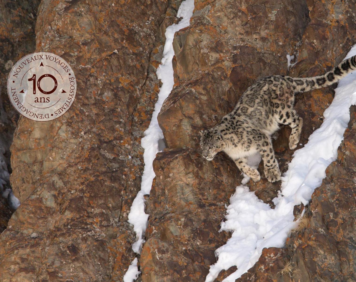 Inde  A l'affût de la panthère des neiges   Découverte Photo Balade nature