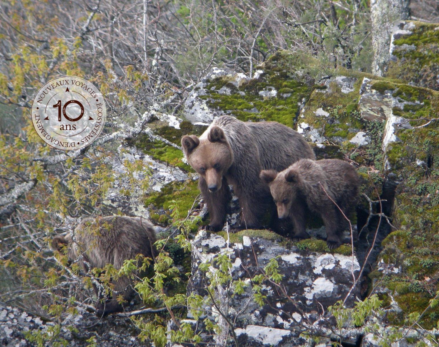 Espagne  Toute l'Espagne au printemps : spécial grands carnivores   Observation nature Balade nature